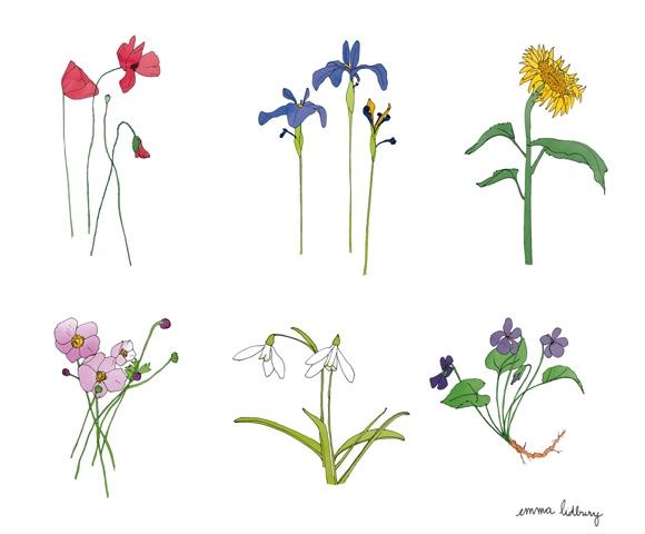 Série de fleurs, illustrations, Lyon